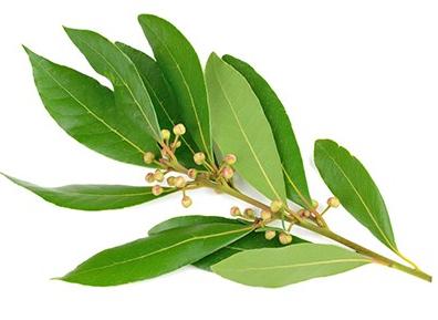 L'huile essentielle de ravintsara, mon indispensable!