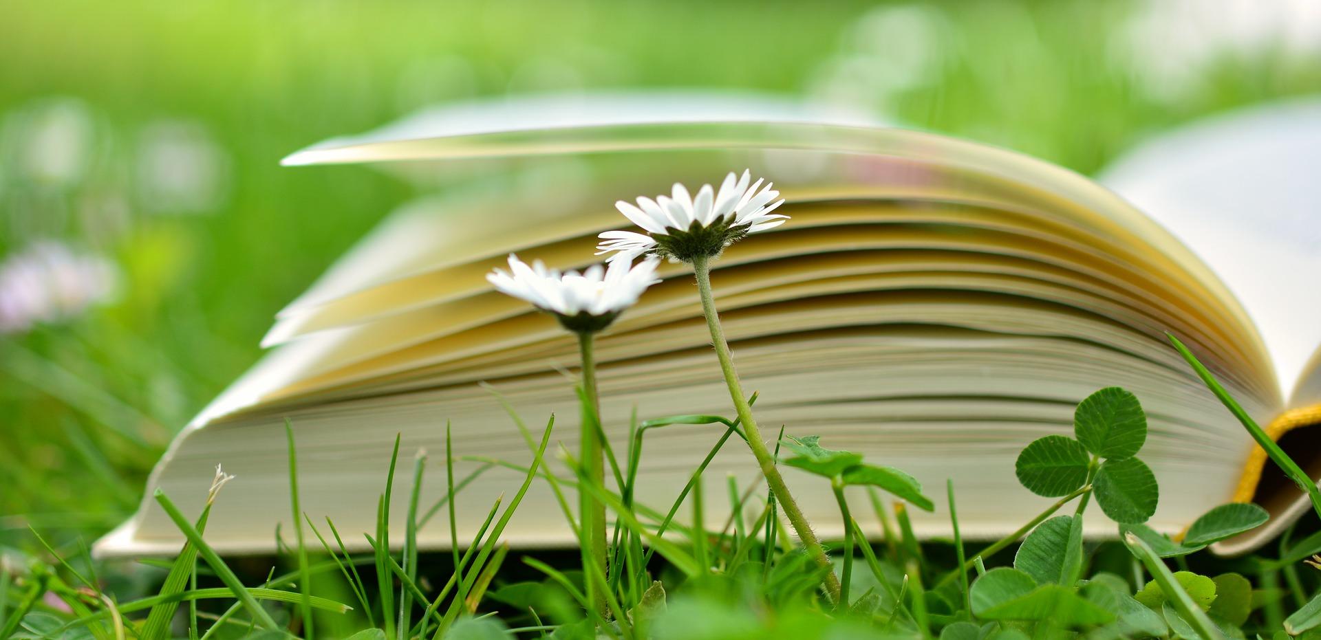 Style de vie #6 : Envie de changement, la naturopathie